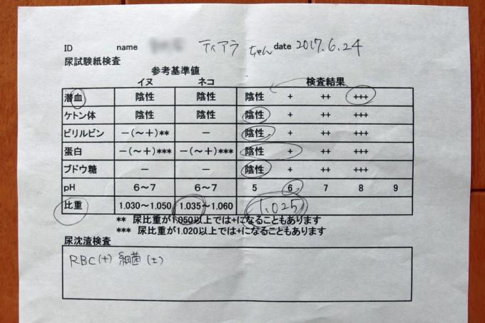 2017年6月24日猫の尿検査結果