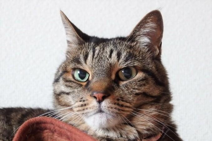 愛猫ティアラ・プロフィール