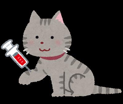 血液検査される猫