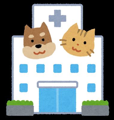高齢猫に全身麻酔を伴う内視鏡検査は危険?