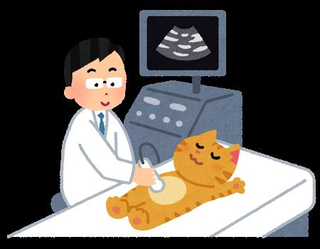 エコー検査を受ける猫