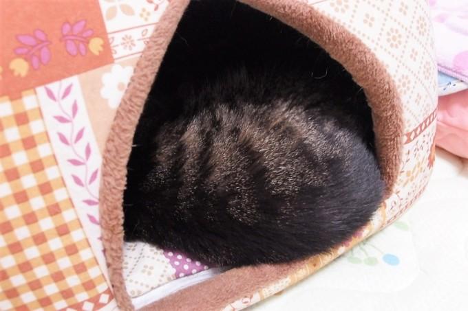 蓄熱ベッドから出る猫の背中