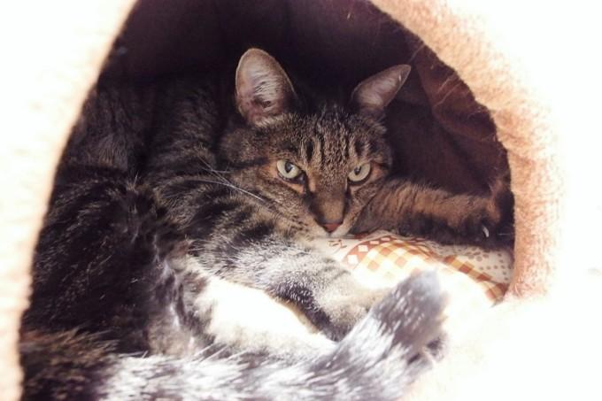 蓄熱ベッドでくつろぐ猫