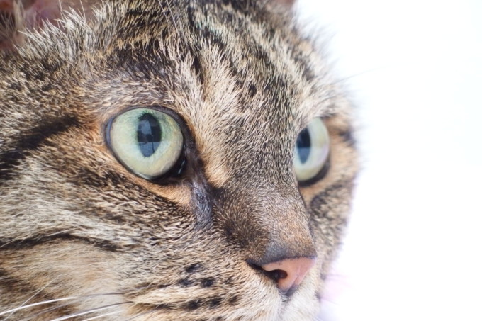 猫の目・ティアラ