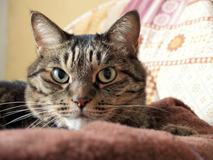 ベッドの上のティアラ